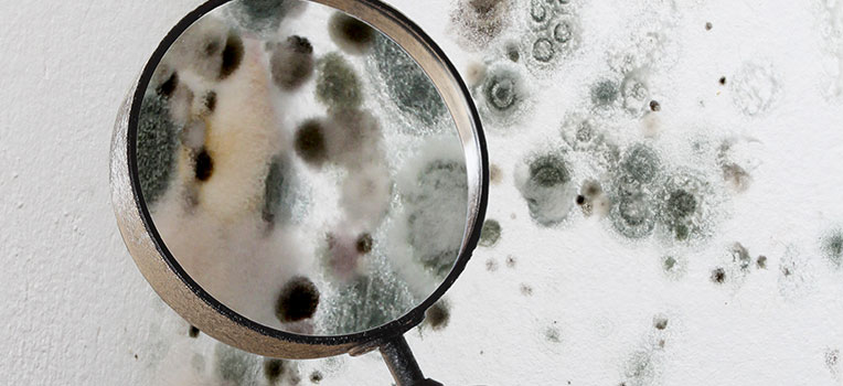 How Does Mold Effect The Human Body